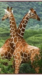 Жирафы  - греющая инфракрасная, настенная картина гибкая