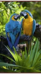 Попугаи - греющая инфракрасная, настенная картина гибкая